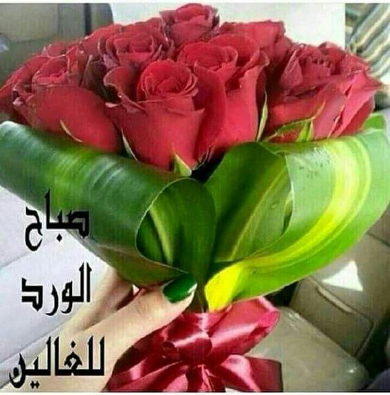 بالصور صباح الورد للورد , احلى تحيه صباحيه بلون الورود 3223 7