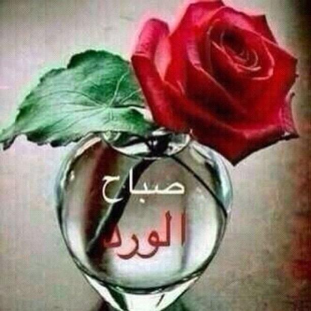 بالصور صباح الورد للورد , احلى تحيه صباحيه بلون الورود 3223 8