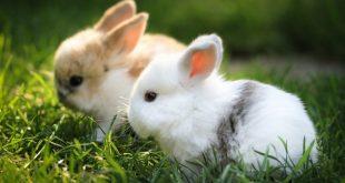 صور صور حيوانات اليفه , خلفيات اجمل الكائنات المستانسه