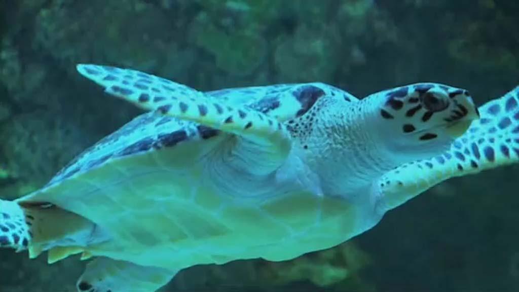 بالصور عجائب البحر , ماذا تعرف عن عجائب البحر 3363 10