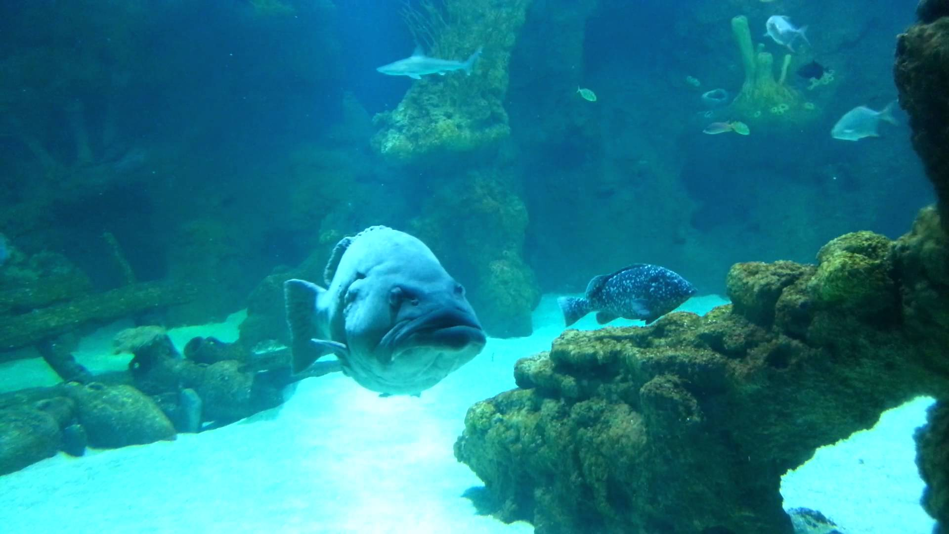 بالصور عجائب البحر , ماذا تعرف عن عجائب البحر 3363 11