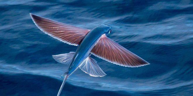 صورة عجائب البحر , ماذا تعرف عن عجائب البحر