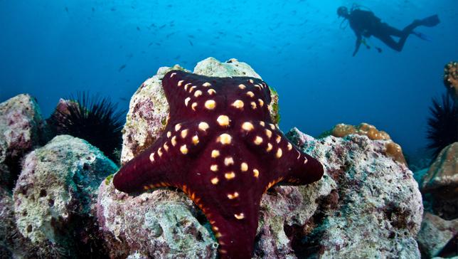 بالصور عجائب البحر , ماذا تعرف عن عجائب البحر 3363 4