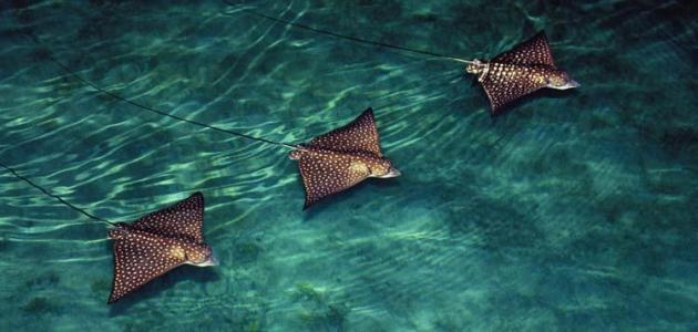 بالصور عجائب البحر , ماذا تعرف عن عجائب البحر 3363 5