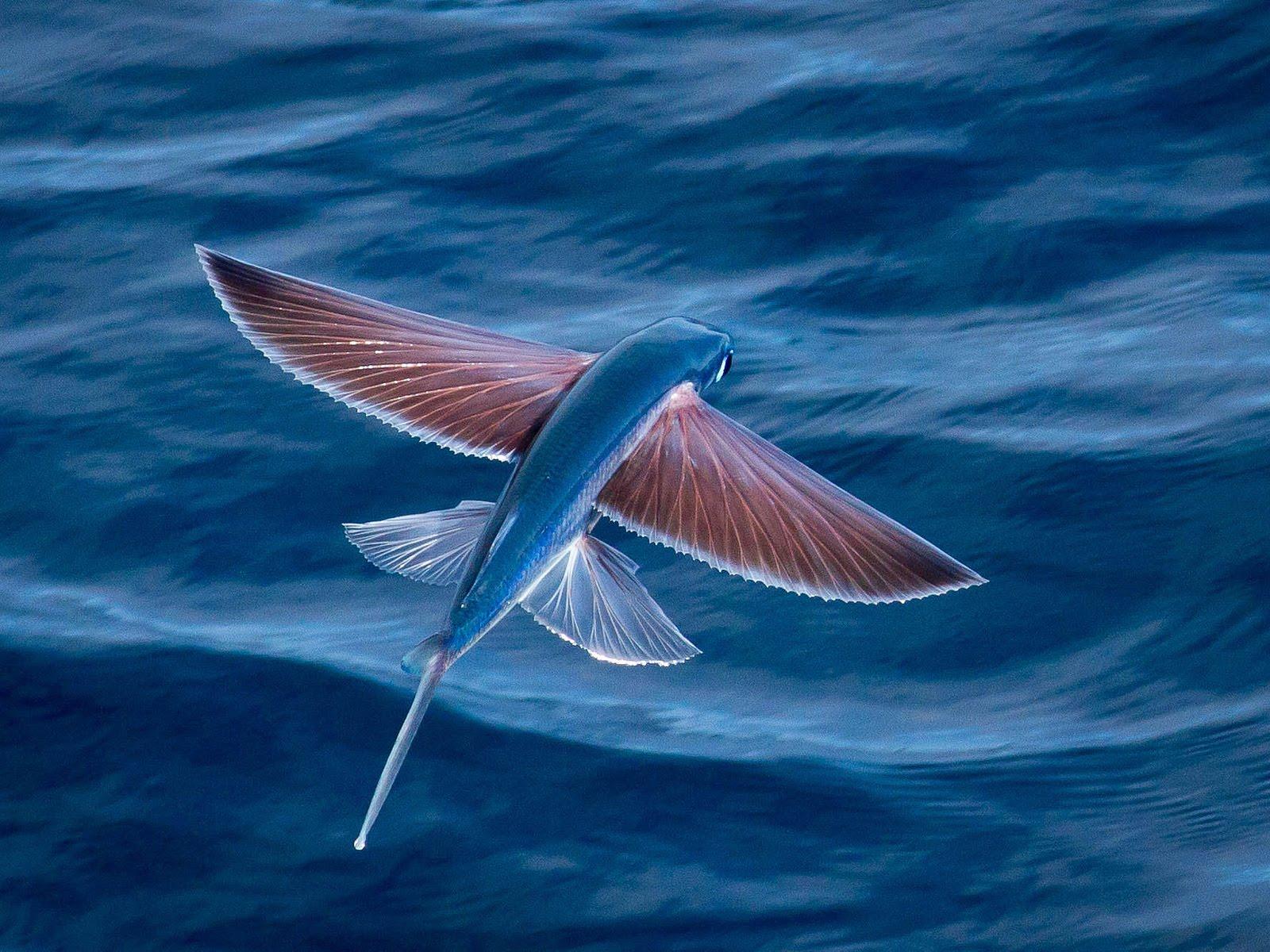 صور عجائب البحر , ماذا تعرف عن عجائب البحر