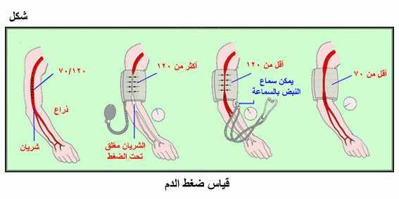 صورة اسباب انخفاض ضغط الدم , تعرف علي اسباب انخفاض ضغط الدم 3700 1