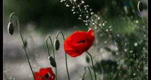 صوره صور جميله للفيس , اجمل صور للفيس بوك