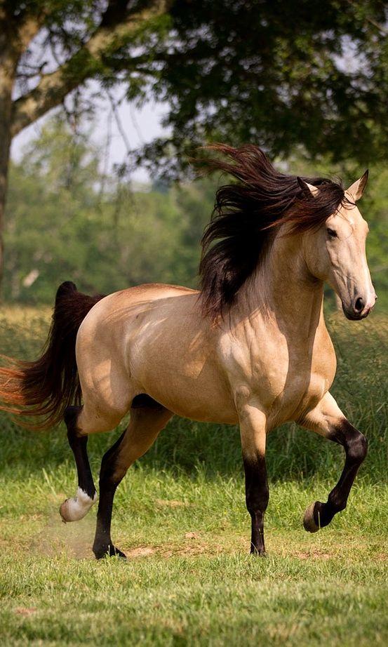 بالصور صور خيل , اجمل صور خيول 3740 1