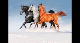 صورة صور خيل , اجمل صور خيول