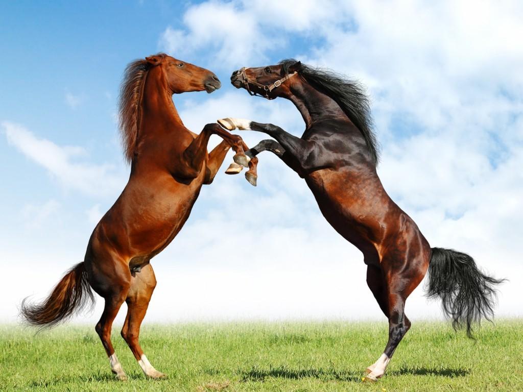 بالصور صور خيل , اجمل صور خيول 3740 2