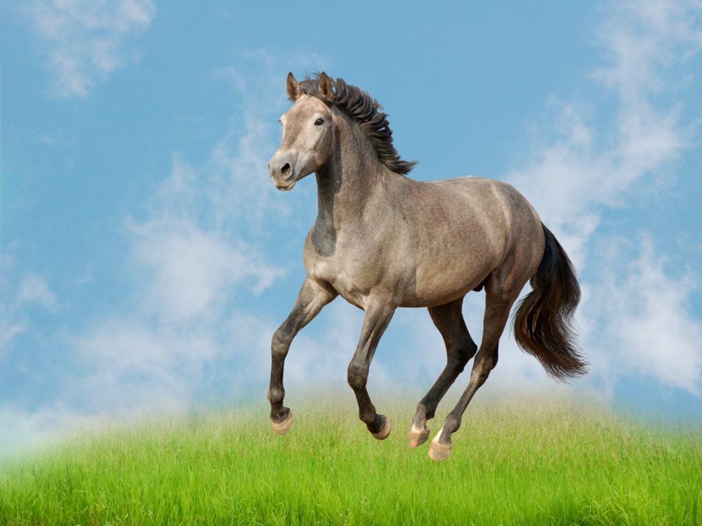 بالصور صور خيل , اجمل صور خيول 3740 3