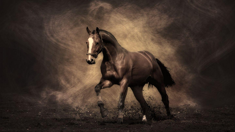 بالصور صور خيل , اجمل صور خيول 3740 5