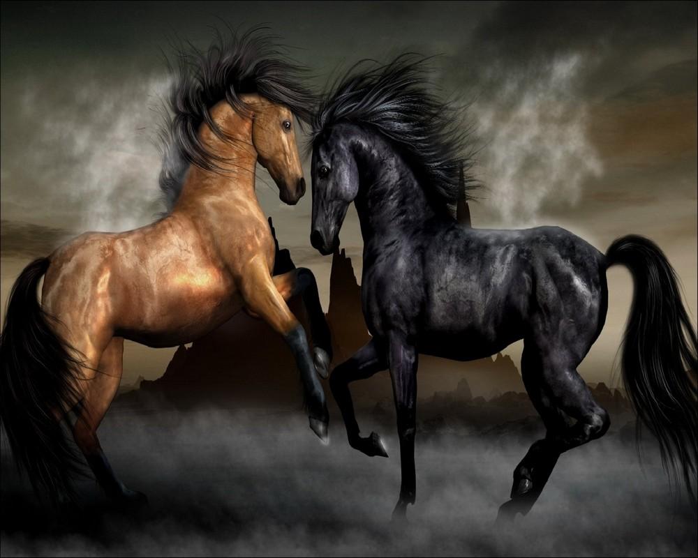 بالصور صور خيل , اجمل صور خيول 3740 6