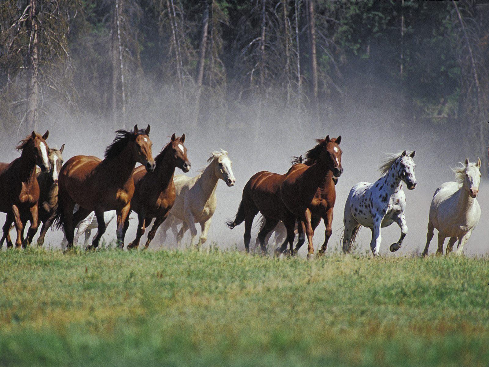 بالصور صور خيل , اجمل صور خيول 3740 8