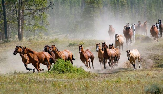 بالصور صور خيل , اجمل صور خيول 3740 9