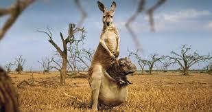 بالصور صور حيوانات مضحكة , صور حيوانات تموت من الضحك 4840 12