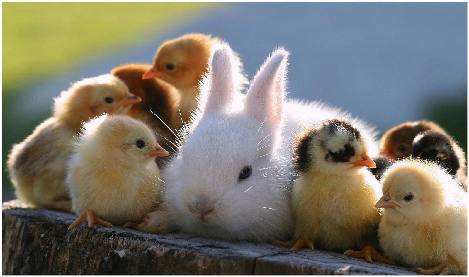 بالصور صور حيوانات مضحكة , صور حيوانات تموت من الضحك 4840 4