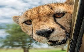 بالصور صور حيوانات مضحكة , صور حيوانات تموت من الضحك 4840 5