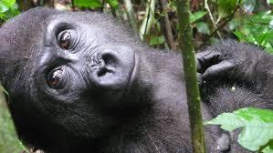 بالصور صور حيوانات مضحكة , صور حيوانات تموت من الضحك 4840 6