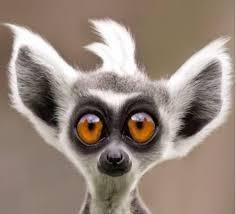 بالصور صور حيوانات مضحكة , صور حيوانات تموت من الضحك 4840