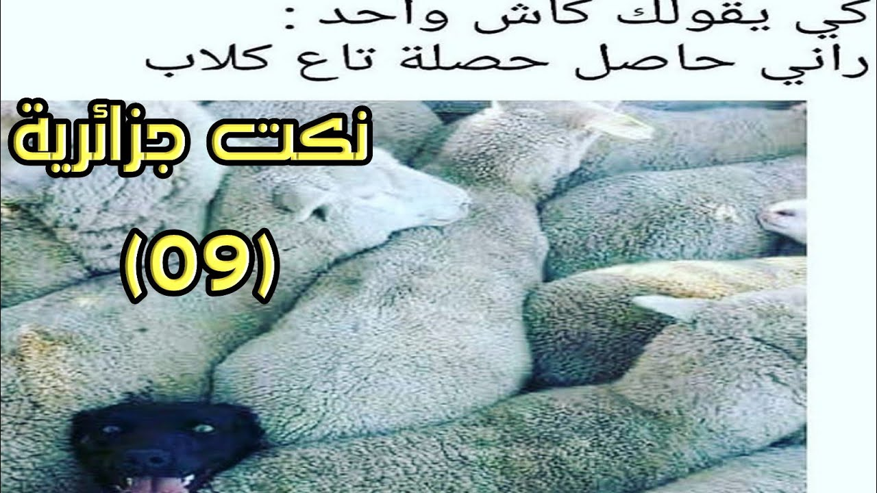 بالصور صور مضحكة جزائرية , احلى الضحك والنكت من شعب الجزائر 3465 3