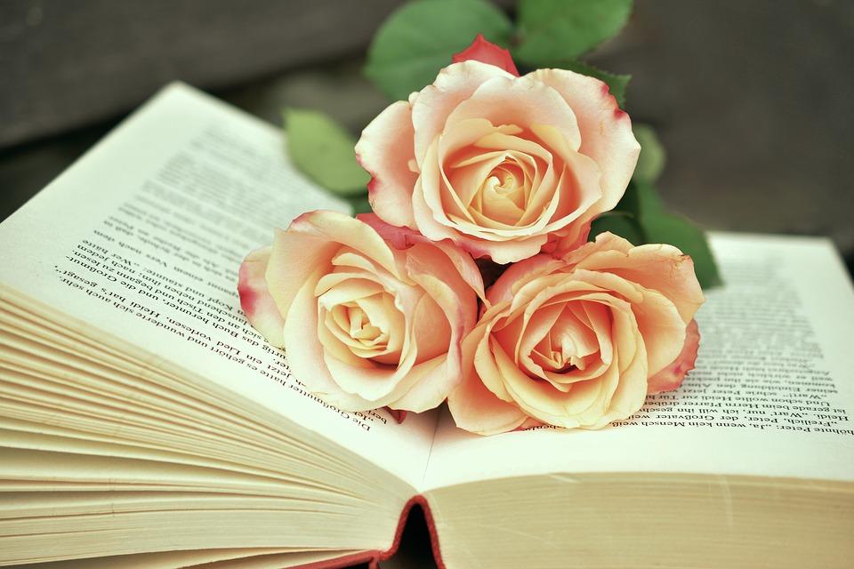 بالصور صور ورود روعه , اجمل صور الورود الرقيقة 3469 6