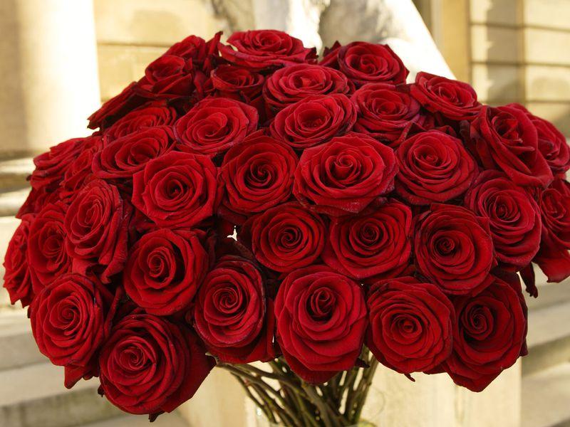 بالصور صور ورود روعه , اجمل صور الورود الرقيقة 3469 7