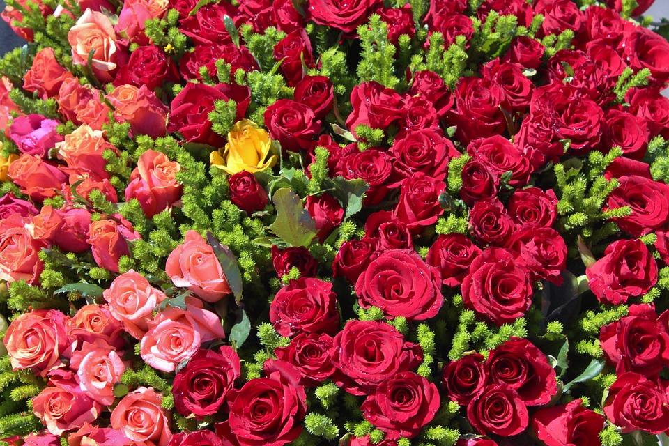 بالصور صور ورود روعه , اجمل صور الورود الرقيقة 3469 8