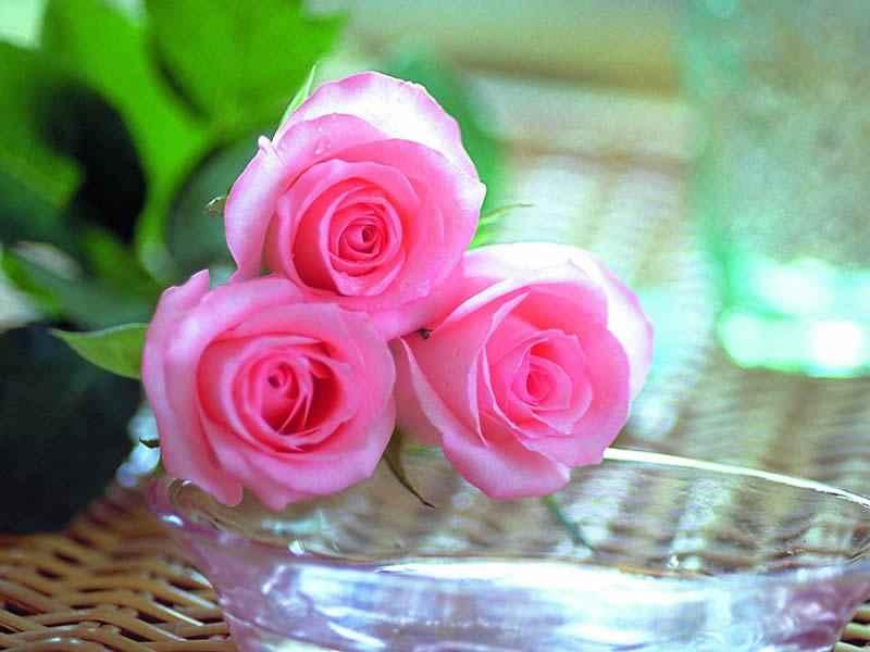 بالصور صور ورود روعه , اجمل صور الورود الرقيقة 3469 9