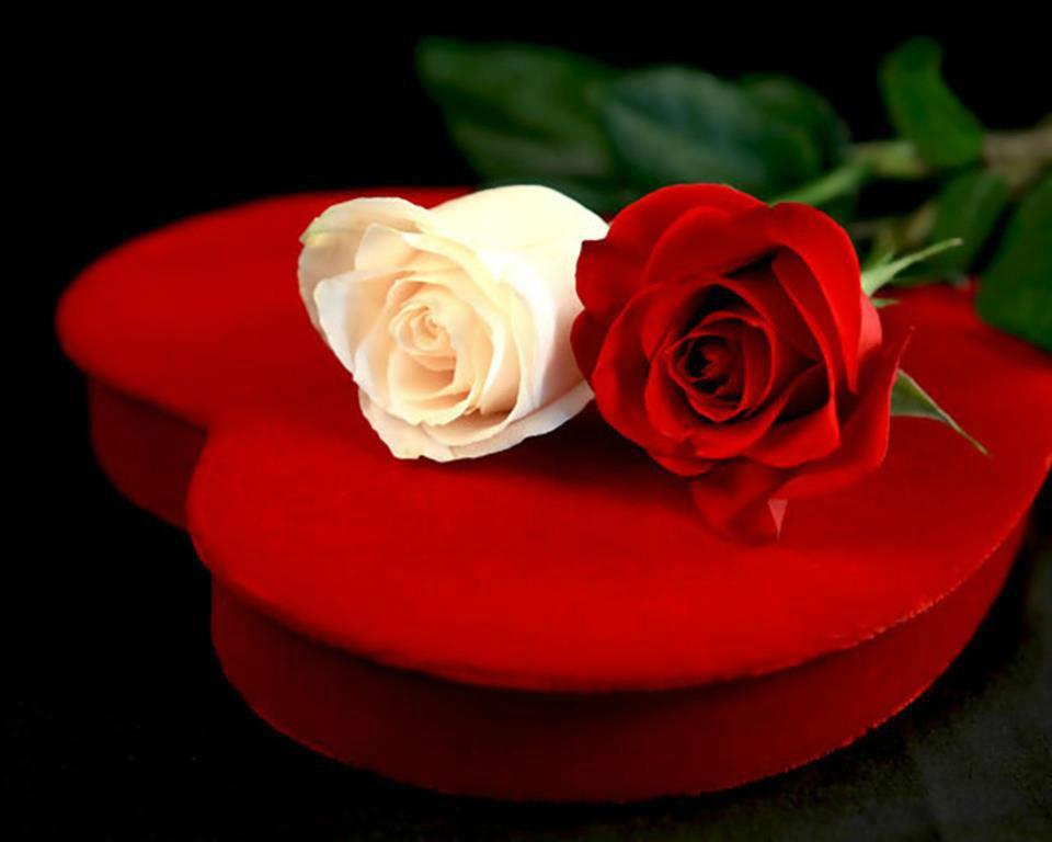 بالصور اجمل وردة في العالم , الورد وما اجمل الورود 3587