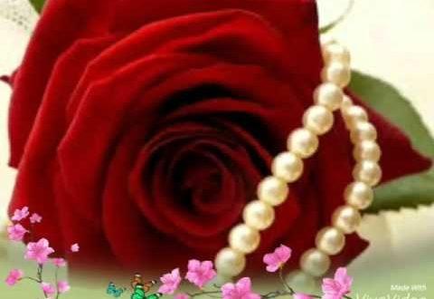 صور صور الورد , احلى واجمل صور الورد