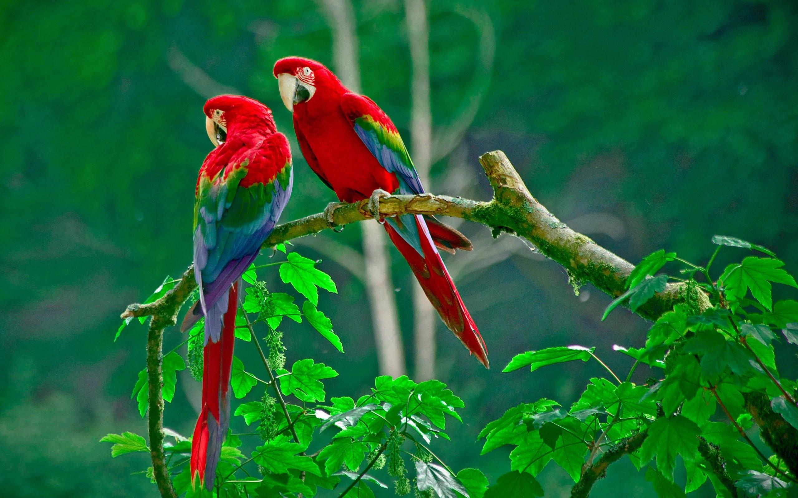 بالصور اجمل صور العالم , شاهد صور جميلة للعالم 3771 11