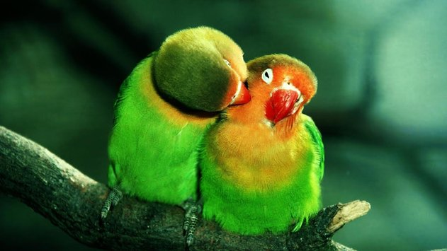 بالصور اجمل صور العالم , شاهد صور جميلة للعالم 3771 12