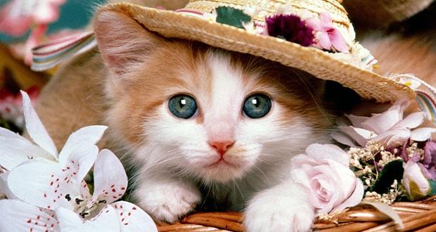 بالصور صور قطط جميلة , شاهد اجمل صور للقطط 3903 1