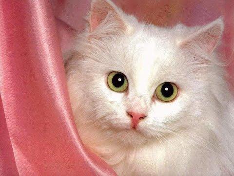 بالصور صور قطط جميلة , شاهد اجمل صور للقطط 3903 15