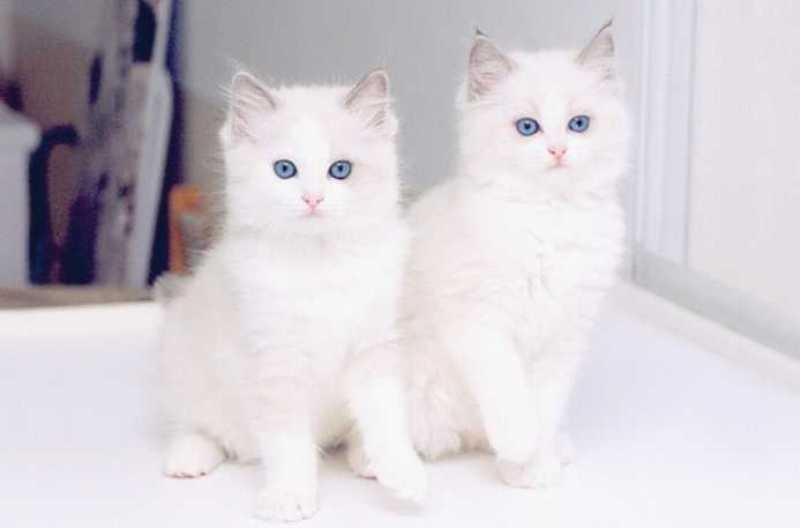 بالصور صور قطط جميلة , شاهد اجمل صور للقطط 3903 16