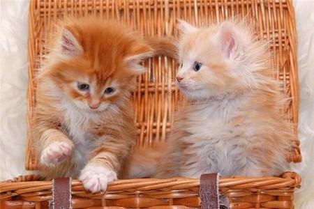 بالصور صور قطط جميلة , شاهد اجمل صور للقطط 3903 17