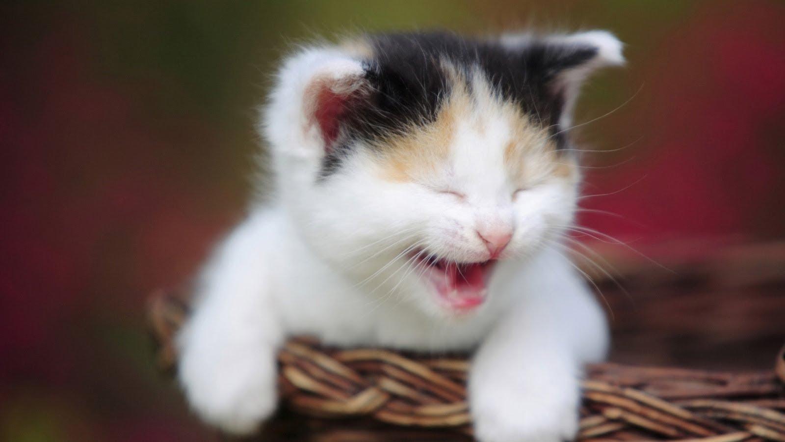 بالصور صور قطط جميلة , شاهد اجمل صور للقطط 3903 18