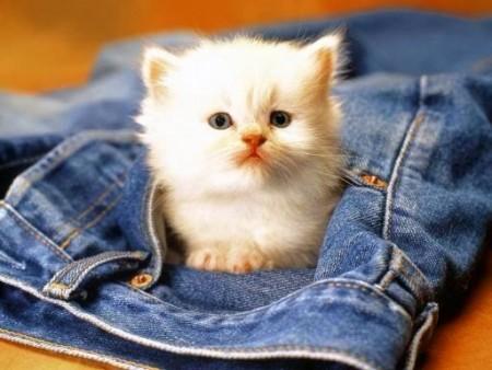 بالصور صور قطط جميلة , شاهد اجمل صور للقطط 3903 20