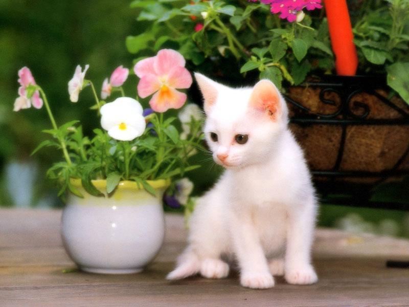 بالصور صور قطط جميلة , شاهد اجمل صور للقطط 3903 21