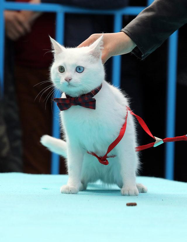 بالصور صور قطط جميلة , شاهد اجمل صور للقطط 3903 22
