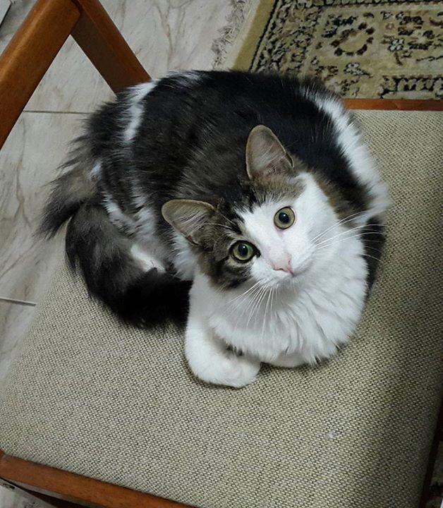 بالصور صور قطط جميلة , شاهد اجمل صور للقطط 3903 23