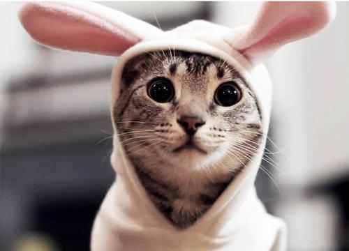 بالصور صور قطط جميلة , شاهد اجمل صور للقطط 3903 24