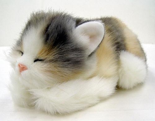 بالصور صور قطط جميلة , شاهد اجمل صور للقطط 3903 25