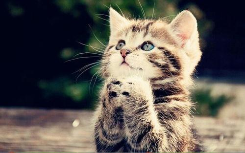 بالصور صور قطط جميلة , شاهد اجمل صور للقطط 3903 26