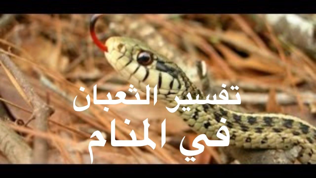 بالصور رؤية الثعبان في المنام , تفسير ان يرى النائم الثعبان في المنام 3905 3