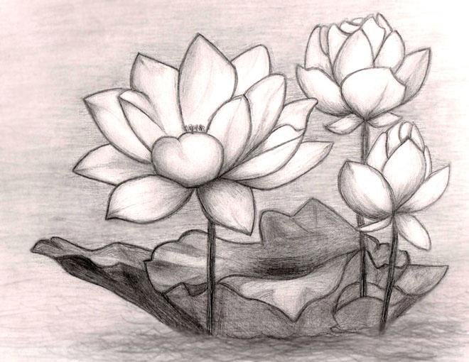 بالصور رسومات جميلة وسهلة , شاهد اجمل و اسهل الرسومات 3915 7