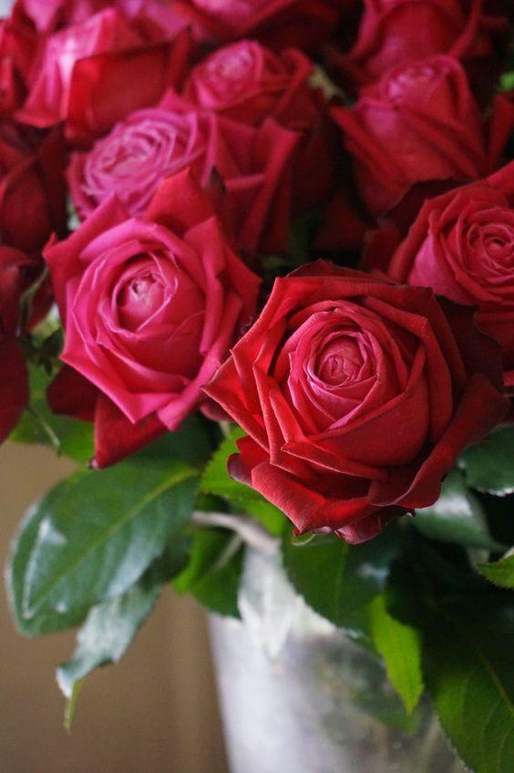 صوره اجمل ورود الحب , صور ورود الحب الجميلة