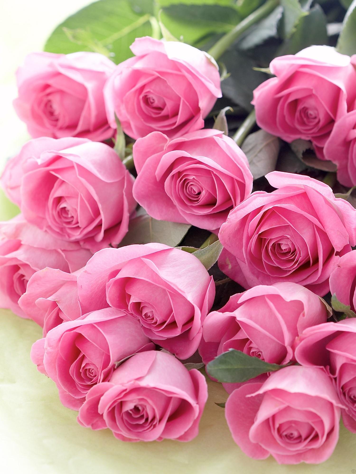 بالصور اجمل ورود الحب , صور ورود الحب الجميلة 3921 12