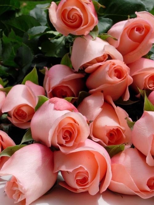 بالصور اجمل ورود الحب , صور ورود الحب الجميلة 3921 14